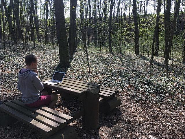 Práce v lese na Bylance u Kutné Hory
